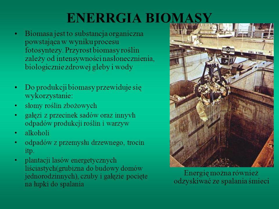 ENERRGIA BIOMASY Biomasa jest to substancja organiczna powstająca w wyniku procesu fotosyntezy. Przyrost biomasy roślin zależy od intensywności nasłon