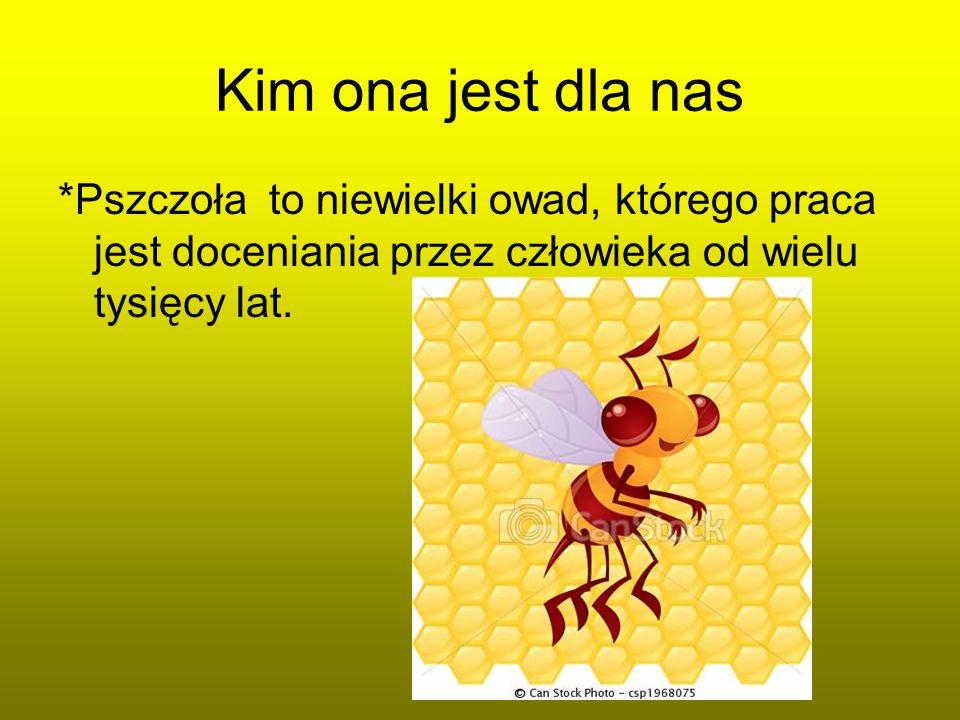 Kim ona jest dla nas *Pszczoła to niewielki owad, którego praca jest doceniania przez człowieka od wielu tysięcy lat.