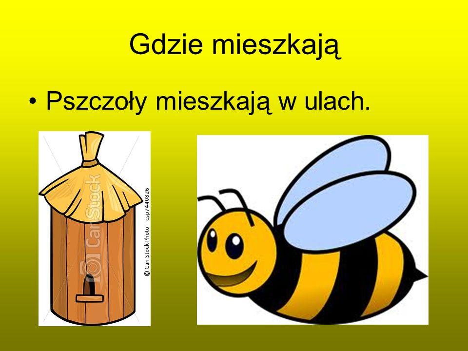 Gdzie mieszkają Pszczoły mieszkają w ulach.