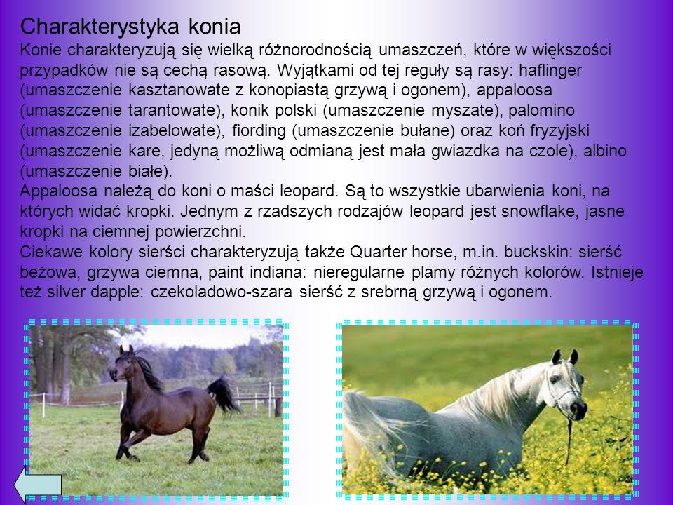 Stęp chód czterotaktowy; koń stawia nogi w kolejności: lewa tylna, lewa przednia, prawa tylna, prawa przednia.
