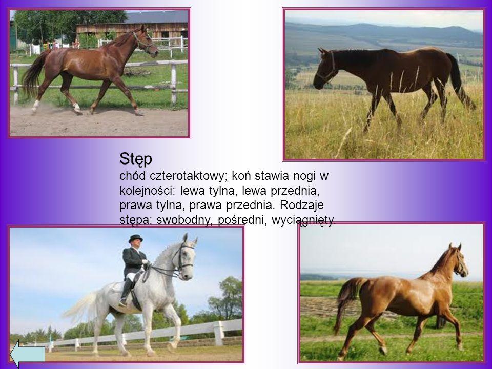 Kłus chód dwutaktowy, koń stawia dwie nogi po przekątnej (prawa przednia i lewa tylna, lewa przednia i prawa tylna).