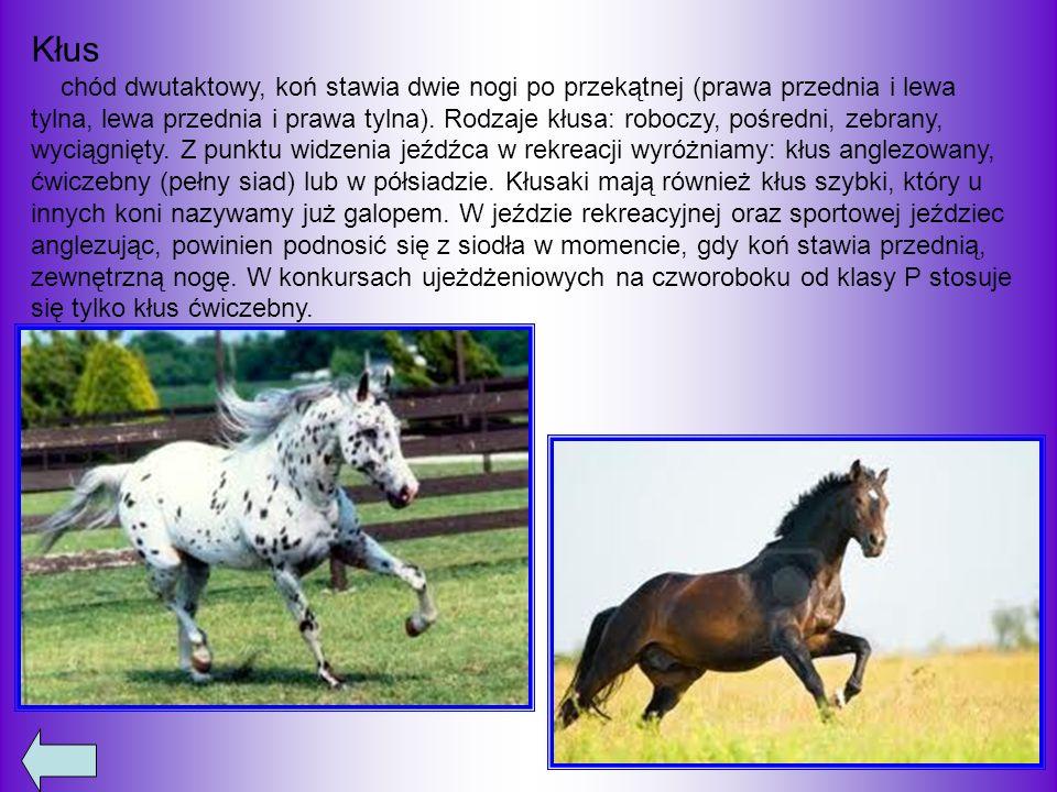 Galop trzytaktowy chód konia (źle ułożone konie czasem galopują czterotaktem), koń stawia najpierw nogę tylną, potem dwie nogi po przekątnej, a następnie przednią prowadzącą – w zależności więc od tego, która noga stawiana jest jako ostatnia, rozróżnia się galop na lewą i prawą nogę.