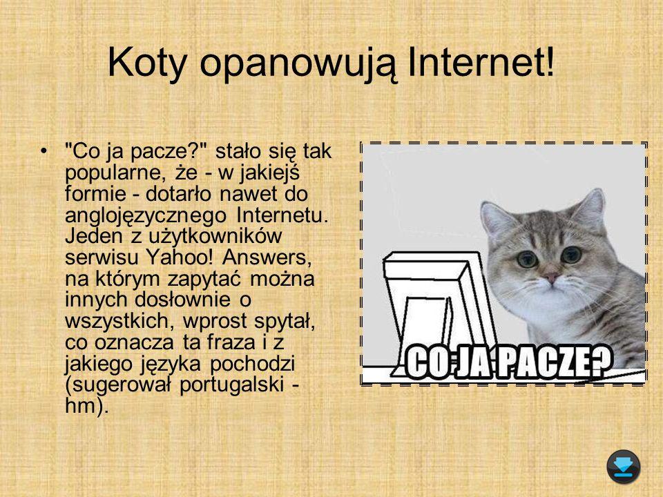 Koty opanowują Internet!
