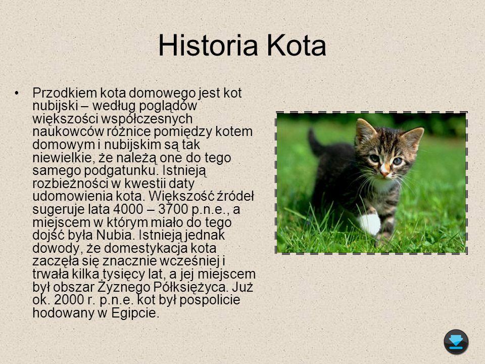 Historia Kota Przodkiem kota domowego jest kot nubijski – według poglądów większości współczesnych naukowców różnice pomiędzy kotem domowym i nubijski