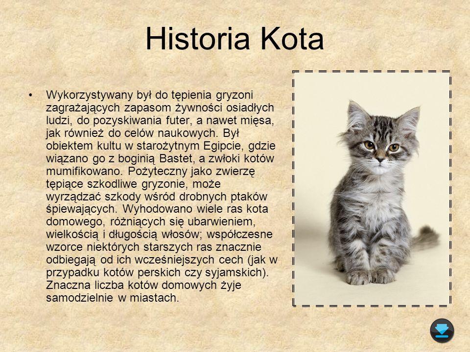 Anatomia Kota Kot domowy ma okrągłą głowę, duże oczy przystosowane do widzenia w niskim natężeniu światła, spiczaste uszy.