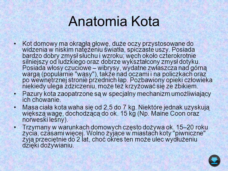 Anatomia Kota Kot domowy ma okrągłą głowę, duże oczy przystosowane do widzenia w niskim natężeniu światła, spiczaste uszy. Posiada bardzo dobry zmysł
