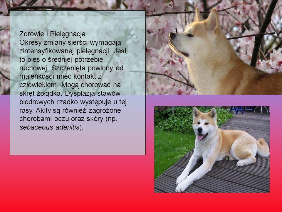 Zdrowie i Pielęgnacja Okresy zmiany sierści wymagają zintensyfikowanej pielęgnacji. Jest to pies o średniej potrzebie ruchowej. Szczenięta powinny od