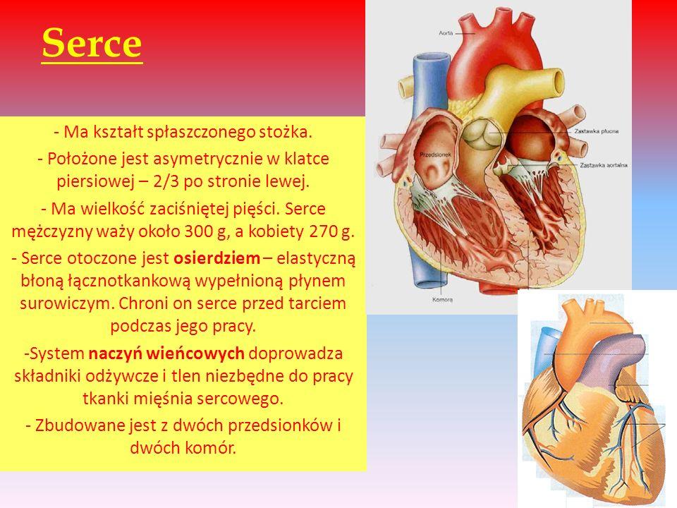 Serce - Ma kształt spłaszczonego stożka. - Położone jest asymetrycznie w klatce piersiowej – 2/3 po stronie lewej. - Ma wielkość zaciśniętej pięści. S