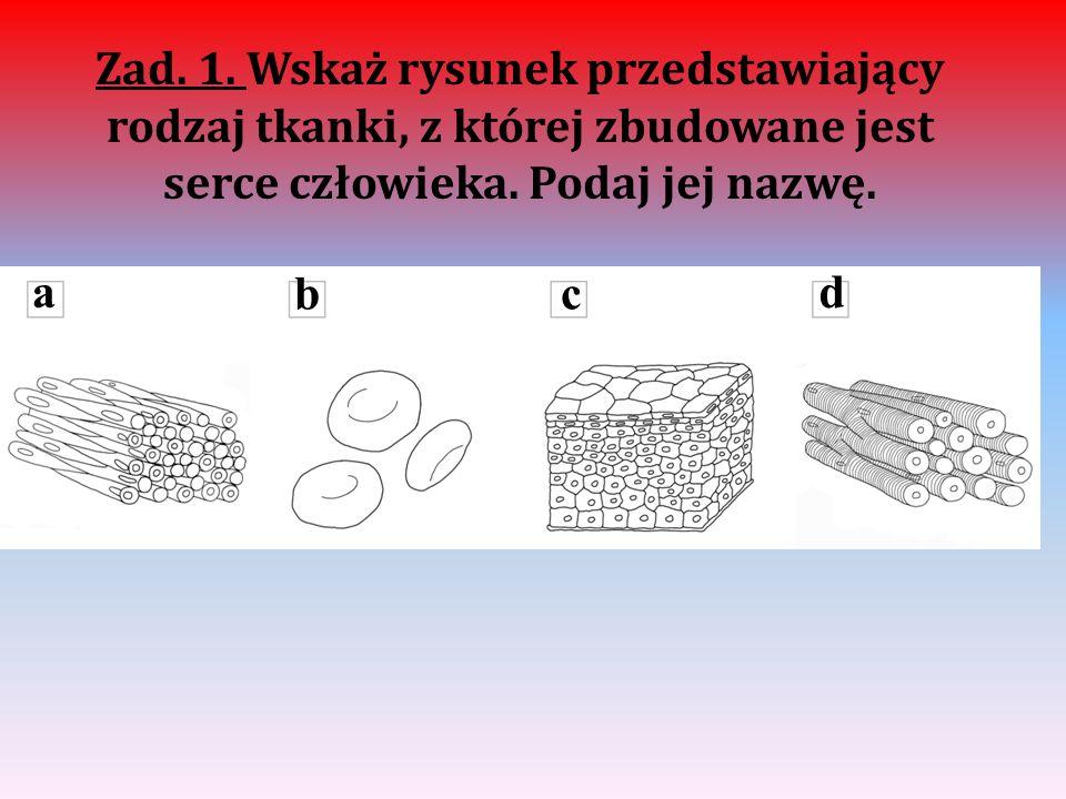 Zad. 1. Wskaż rysunek przedstawiający rodzaj tkanki, z której zbudowane jest serce człowieka. Podaj jej nazwę. a bc d