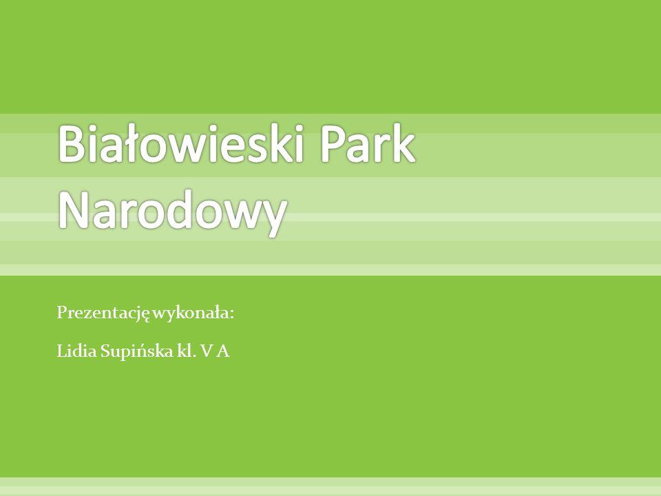 Białowieski Park Narodowy położony jest w województwie podlaskim, w północno- wschodniej części Polski.