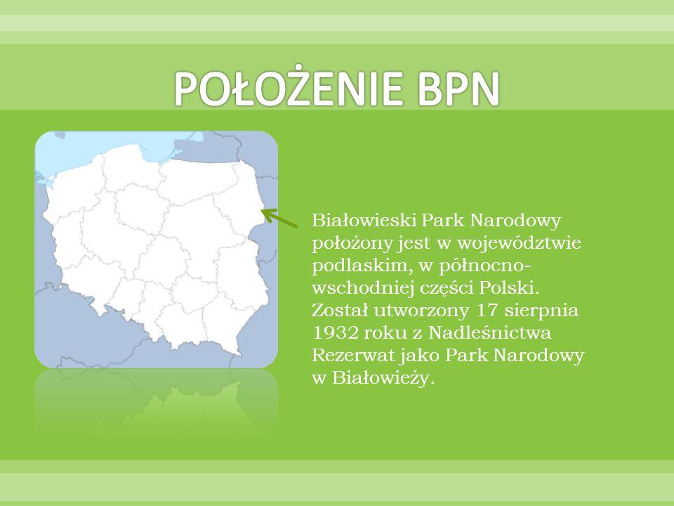 Białowieski Park Narodowy położony jest w województwie podlaskim, w północno- wschodniej części Polski. Został utworzony 17 sierpnia 1932 roku z Nadle