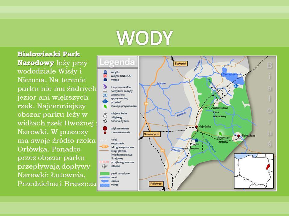 Białowieski Park Narodowy Białowieski Park Narodowy leży przy wododziale Wisły i Niemna. Na terenie parku nie ma żadnych jezior ani większych rzek. Na