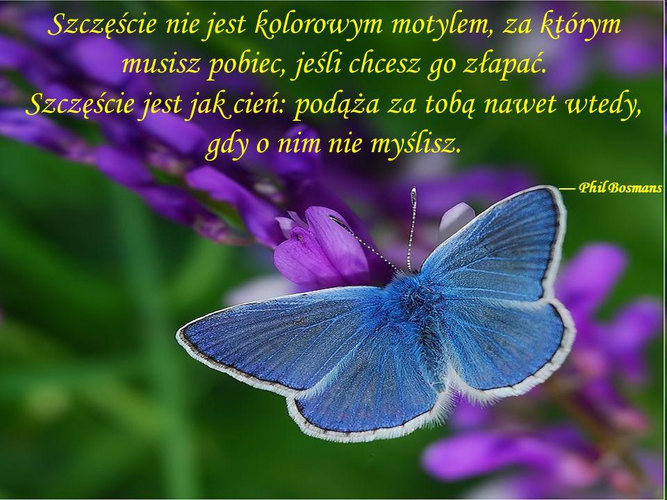 Szczęście nie jest kolorowym motylem, za którym musisz pobiec, jeśli chcesz go złapać. Szczęście jest jak cień: podąża za tobą nawet wtedy, gdy o nim