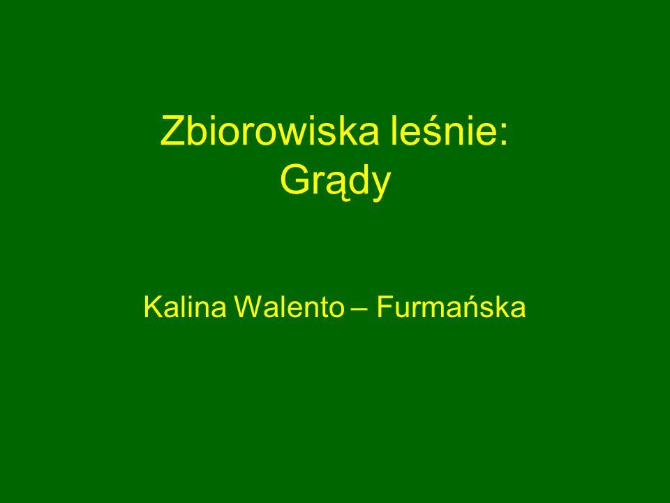 Zbiorowiska leśnie: Grądy Kalina Walento – Furmańska