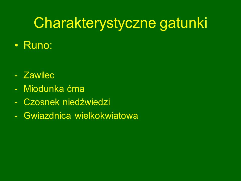 Charakterystyczne gatunki Runo: -Zawilec -Miodunka ćma -Czosnek niedźwiedzi -Gwiazdnica wielkokwiatowa
