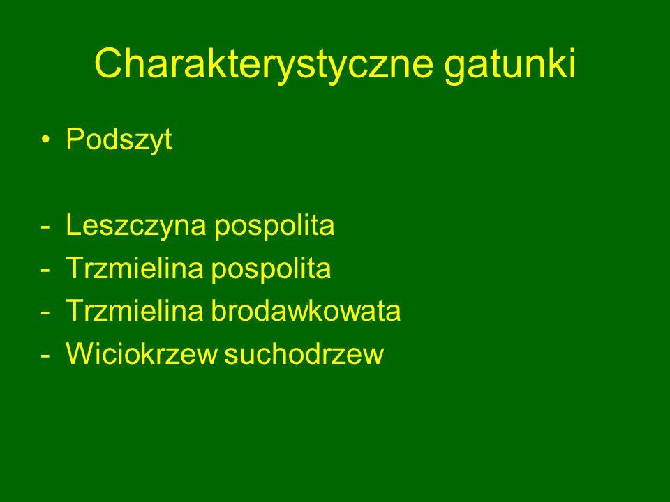 Charakterystyczne gatunki Podszyt -Leszczyna pospolita -Trzmielina pospolita -Trzmielina brodawkowata -Wiciokrzew suchodrzew
