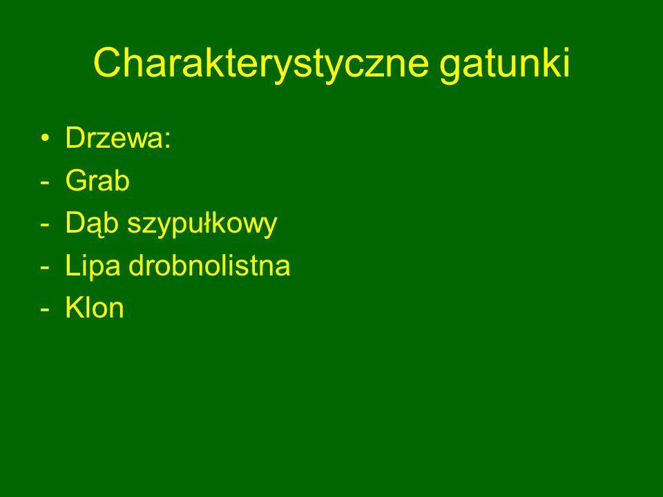 Charakterystyczne gatunki Drzewa: -Grab -Dąb szypułkowy -Lipa drobnolistna -Klon