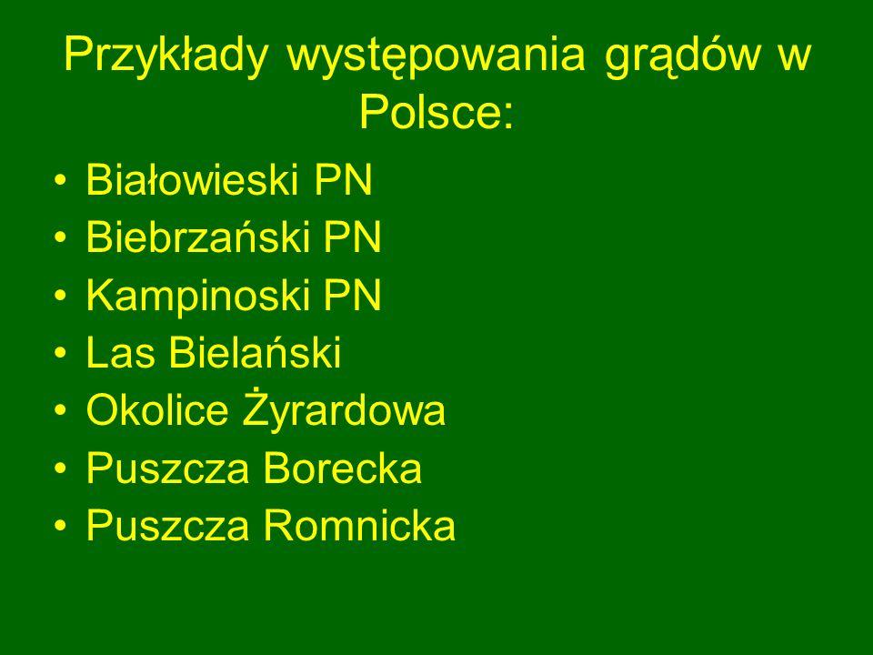 Przykłady występowania grądów w Polsce: Białowieski PN Biebrzański PN Kampinoski PN Las Bielański Okolice Żyrardowa Puszcza Borecka Puszcza Romnicka