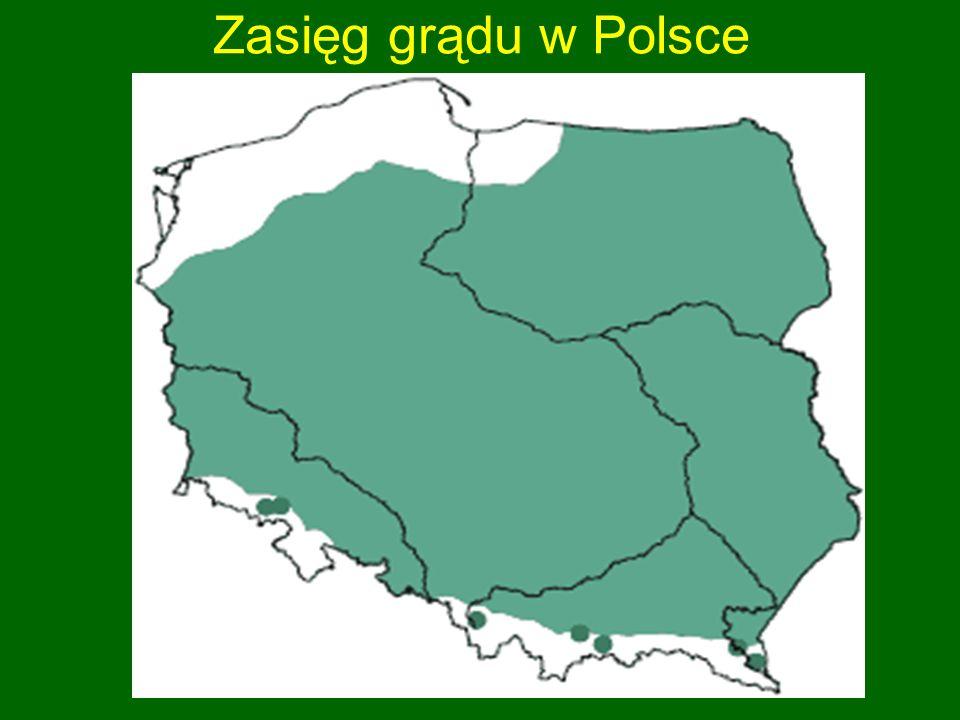 Zasięg grądu w Polsce