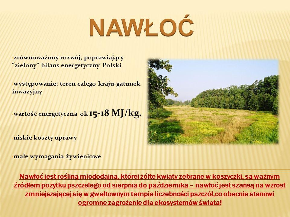 zrównoważony rozwój, poprawiający zielony bilans energetyczny Polski występowanie: teren całego kraju-gatunek inwazyjny wartość energetyczna ok 15-18