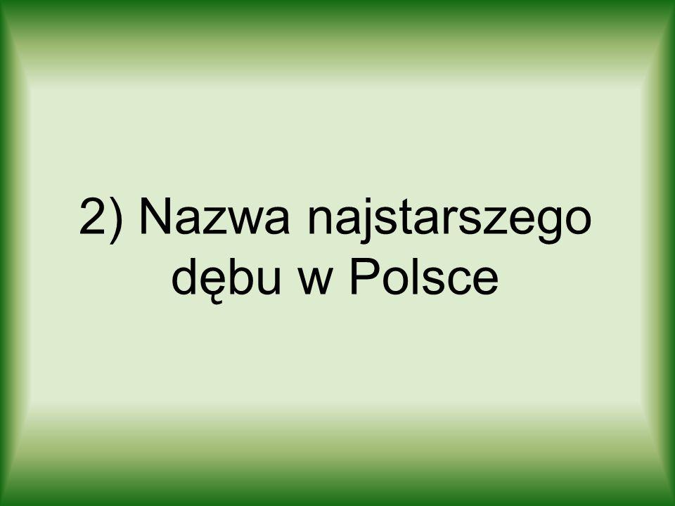 2) Nazwa najstarszego dębu w Polsce