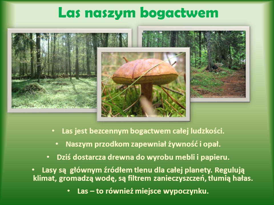 Las naszym bogactwem Las jest bezcennym bogactwem całej ludzkości. Naszym przodkom zapewniał żywność i opał. Dziś dostarcza drewna do wyrobu mebli i p