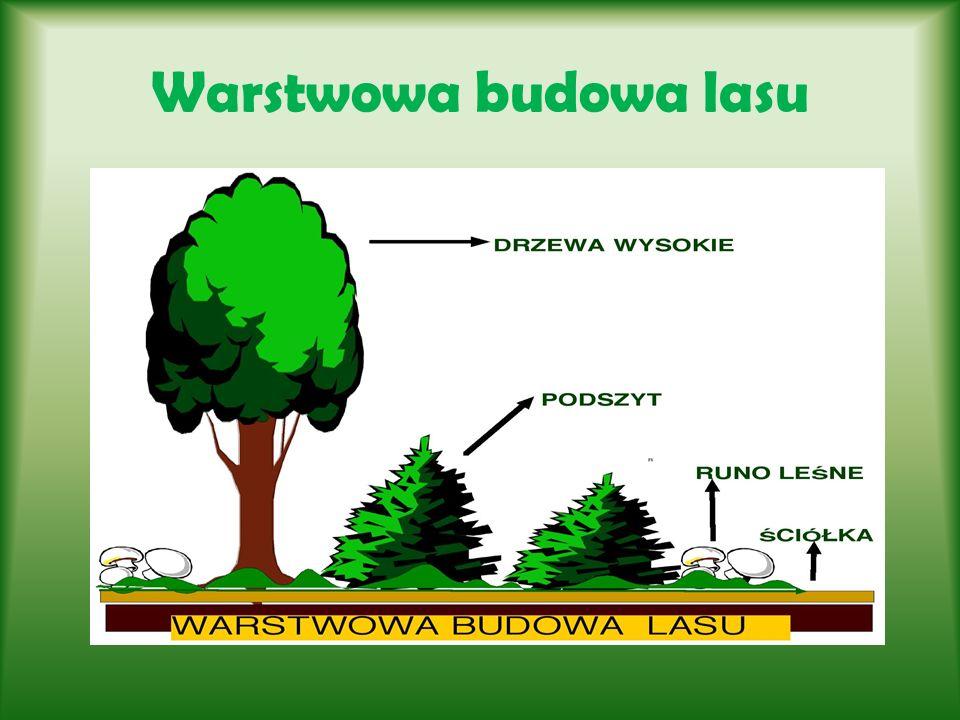 Rodzaje lasów Las liściasty Las liściasty dzieli się na lasy liściaste zrzucające liście na zimę, spotykane w strefie umiarkowanej, lasy szerokolistne spotykane w strefie subtropikalnej oraz lasy wilgotne zwane tropikalnymi.