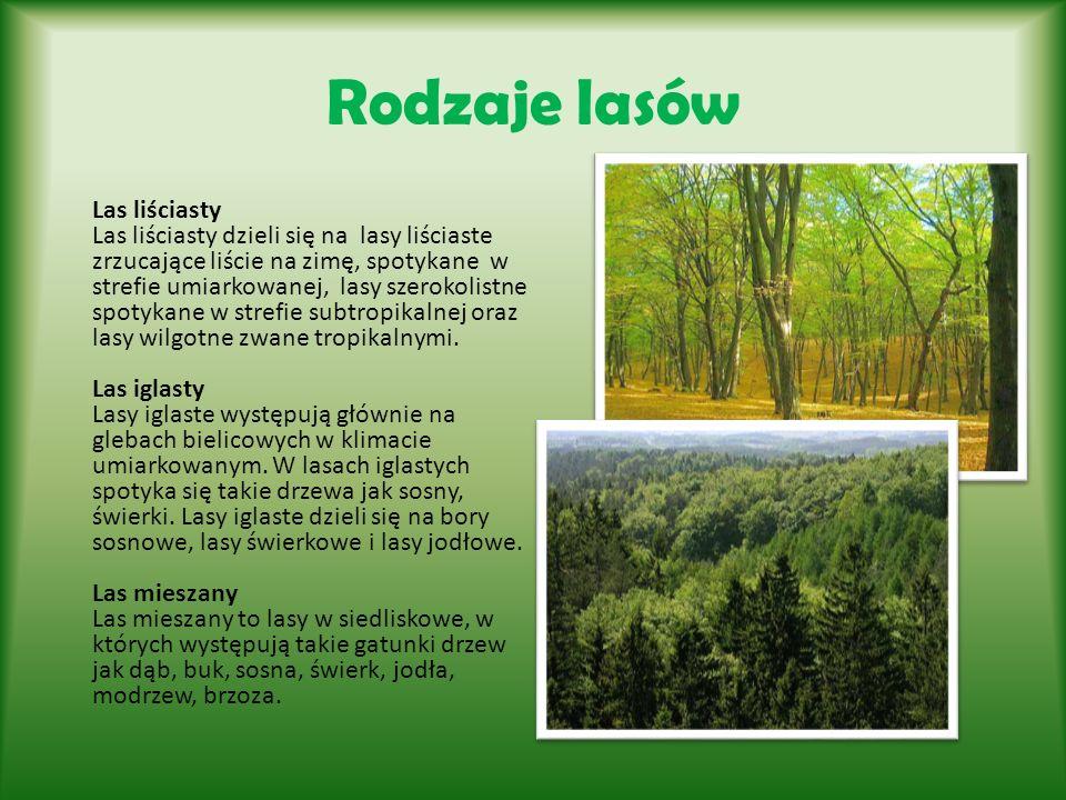 Rodzaje lasów Las liściasty Las liściasty dzieli się na lasy liściaste zrzucające liście na zimę, spotykane w strefie umiarkowanej, lasy szerokolistne