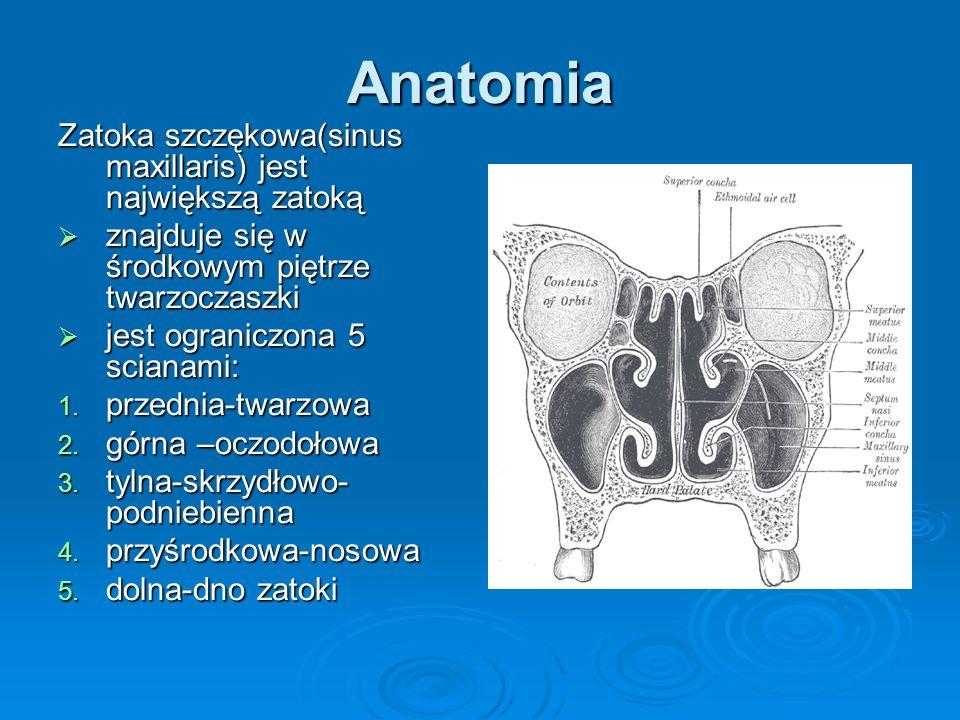 Anatomia Zatoka szczękowa(sinus maxillaris) jest największą zatoką znajduje się w środkowym piętrze twarzoczaszki znajduje się w środkowym piętrze twa