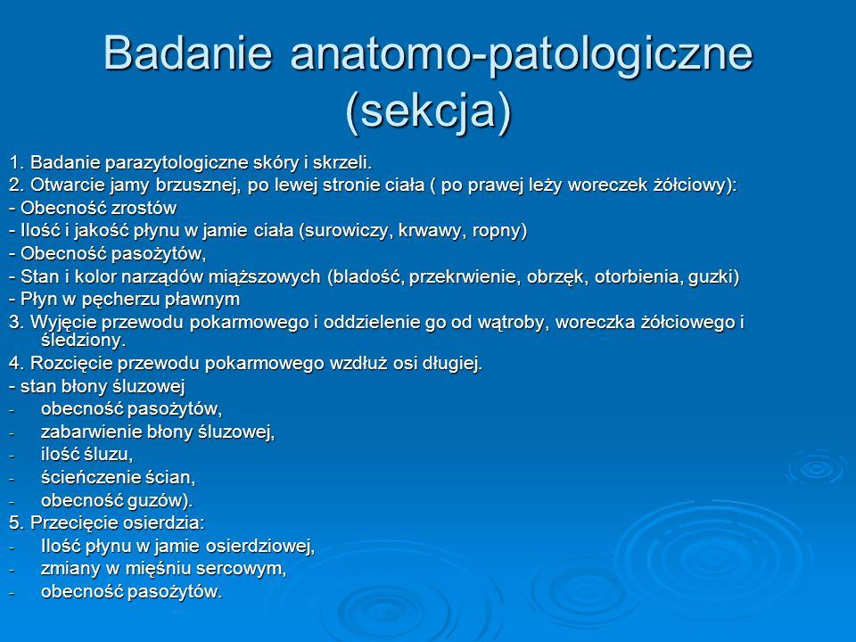 Badanie anatomo-patologiczne (sekcja) 1. Badanie parazytologiczne skóry i skrzeli. 2. Otwarcie jamy brzusznej, po lewej stronie ciała ( po prawej leży