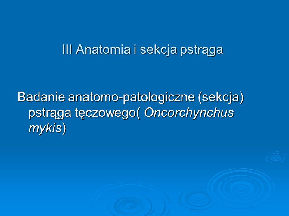 III Anatomia i sekcja pstrąga Badanie anatomo-patologiczne (sekcja) pstrąga tęczowego( Oncorchynchus mykis)
