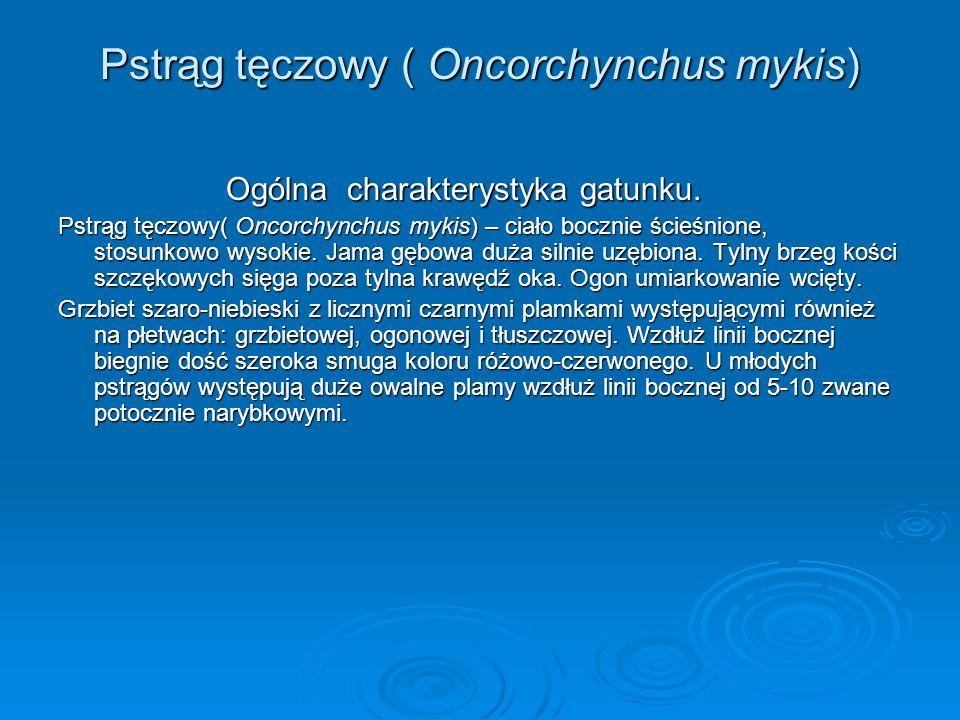 Pstrąg tęczowy ( Oncorchynchus mykis) Ogólna charakterystyka gatunku. Ogólna charakterystyka gatunku. Pstrąg tęczowy( Oncorchynchus mykis) – ciało boc