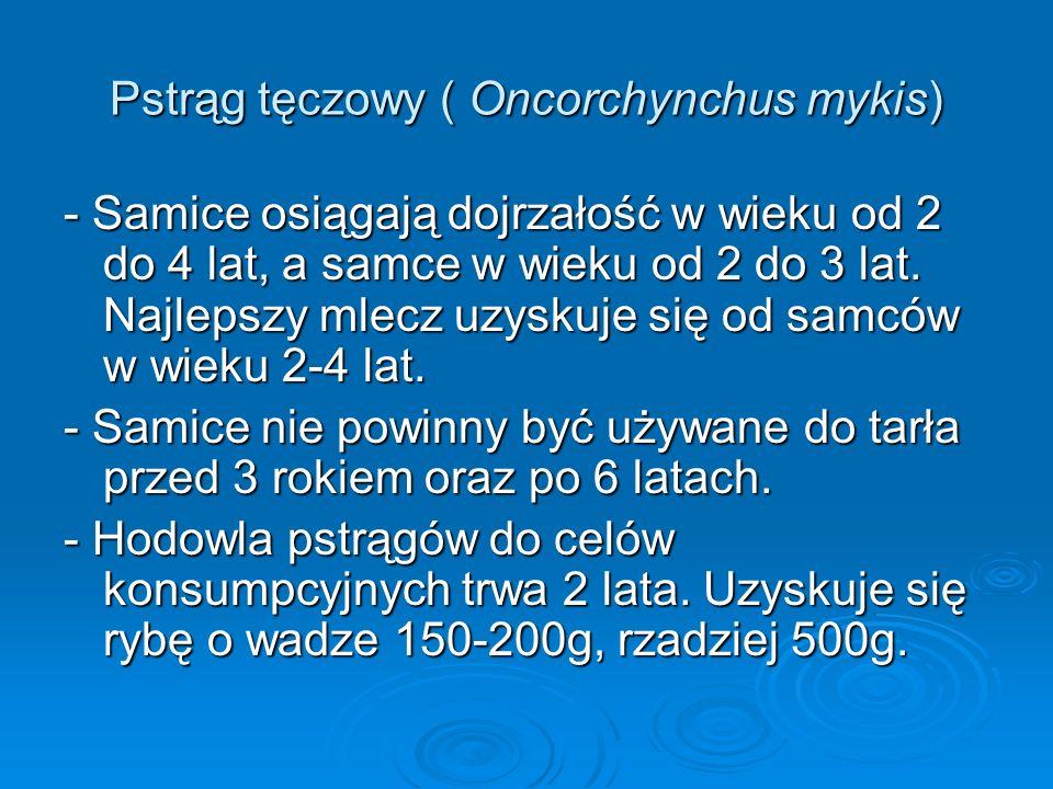 Pstrąg tęczowy ( Oncorchynchus mykis) - Samice osiągają dojrzałość w wieku od 2 do 4 lat, a samce w wieku od 2 do 3 lat. Najlepszy mlecz uzyskuje się