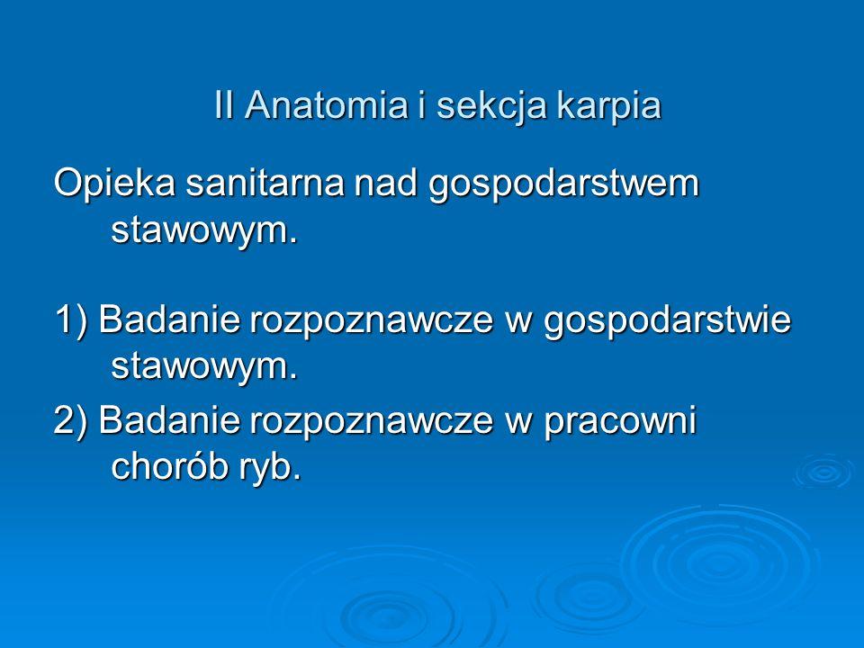 II Anatomia i sekcja karpia II Anatomia i sekcja karpia Opieka sanitarna nad gospodarstwem stawowym. 1) Badanie rozpoznawcze w gospodarstwie stawowym.
