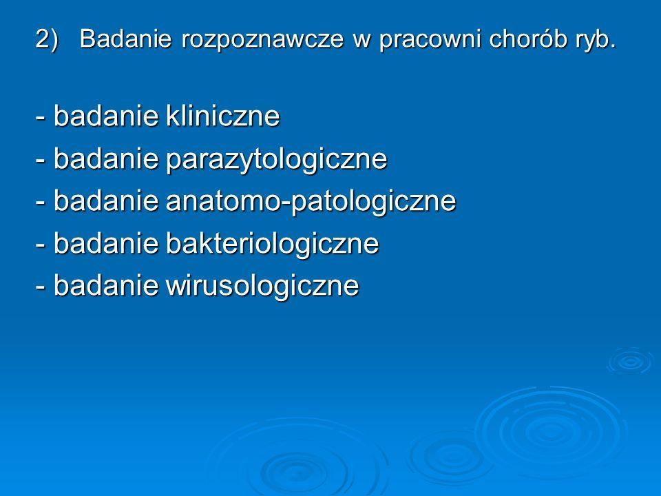 2) Badanie rozpoznawcze w pracowni chorób ryb. - badanie kliniczne - badanie parazytologiczne - badanie anatomo-patologiczne - badanie bakteriologiczn
