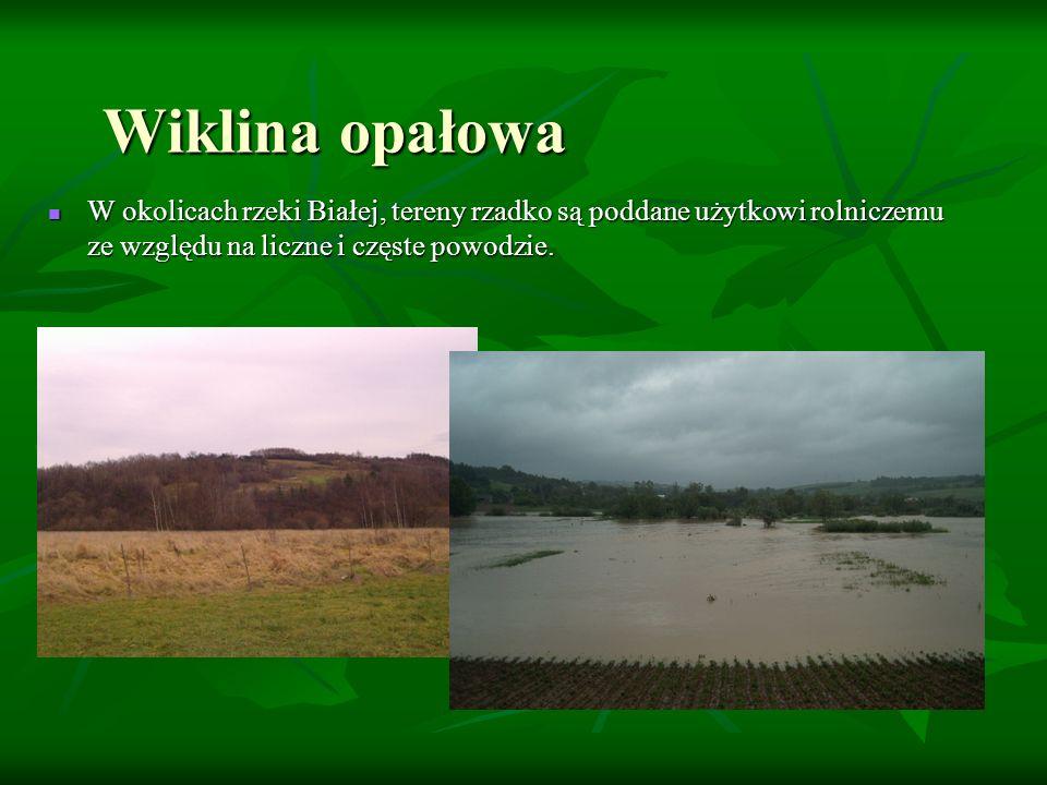 W okolicach rzeki Białej, tereny rzadko są poddane użytkowi rolniczemu ze względu na liczne i częste powodzie. W okolicach rzeki Białej, tereny rzadko