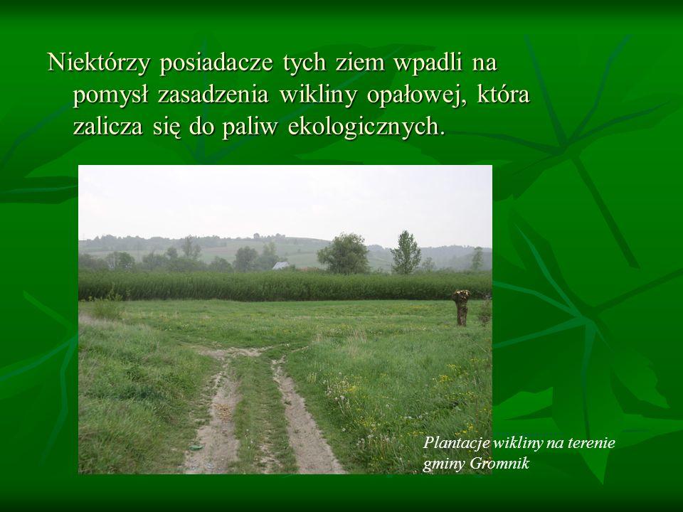 Niektórzy posiadacze tych ziem wpadli na pomysł zasadzenia wikliny opałowej, która zalicza się do paliw ekologicznych. Plantacje wikliny na terenie gm