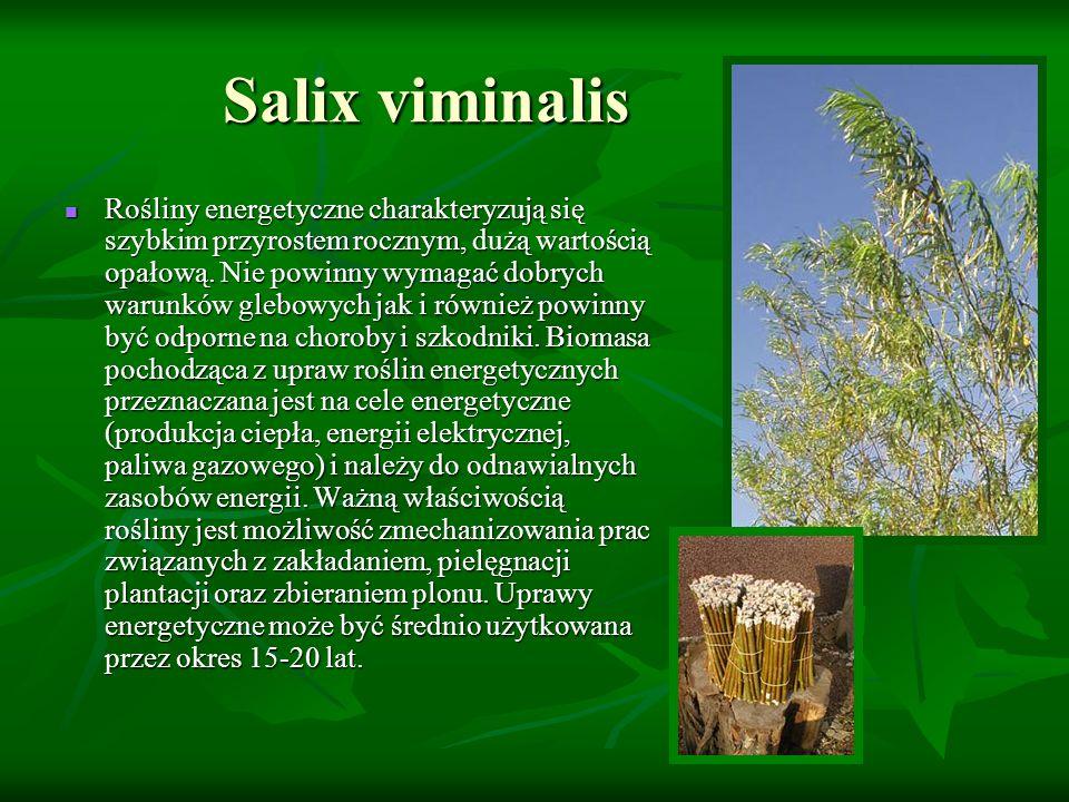 Salix viminalis Rośliny energetyczne charakteryzują się szybkim przyrostem rocznym, dużą wartością opałową. Nie powinny wymagać dobrych warunków glebo