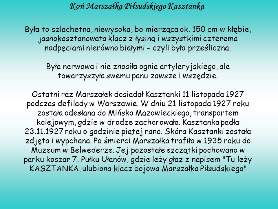 Koń Marszałka Piłsudskiego Kasztanka Była to szlachetna, niewysoka, bo mierząca ok. 150 cm w kłębie, jasnokasztanowata klacz z łysiną i wszystkimi czt
