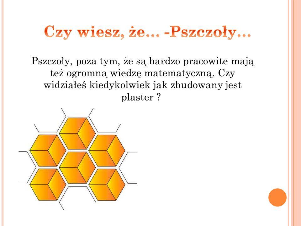 Pszczoły, poza tym, że są bardzo pracowite mają też ogromną wiedzę matematyczną. Czy widziałeś kiedykolwiek jak zbudowany jest plaster ?