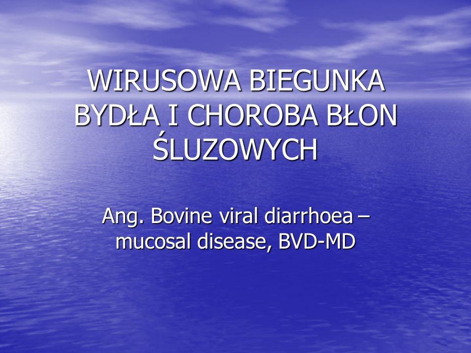 Czynnik zakaźny Wirus BVD-MD należący do rodziny Flaviviridae, rodzaju Pestivirus – wirus RNA Wirus BVD-MD należący do rodziny Flaviviridae, rodzaju Pestivirus – wirus RNA