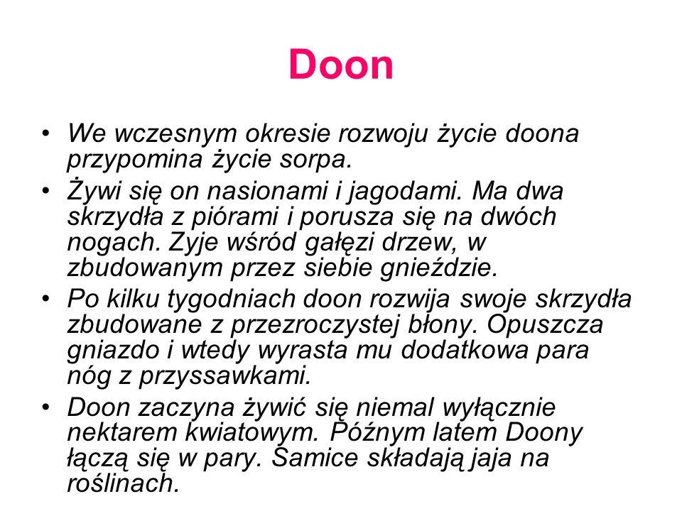 Doon We wczesnym okresie rozwoju życie doona przypomina życie sorpa.