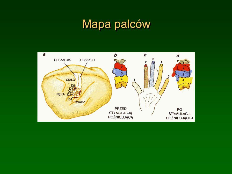 Mapa palców