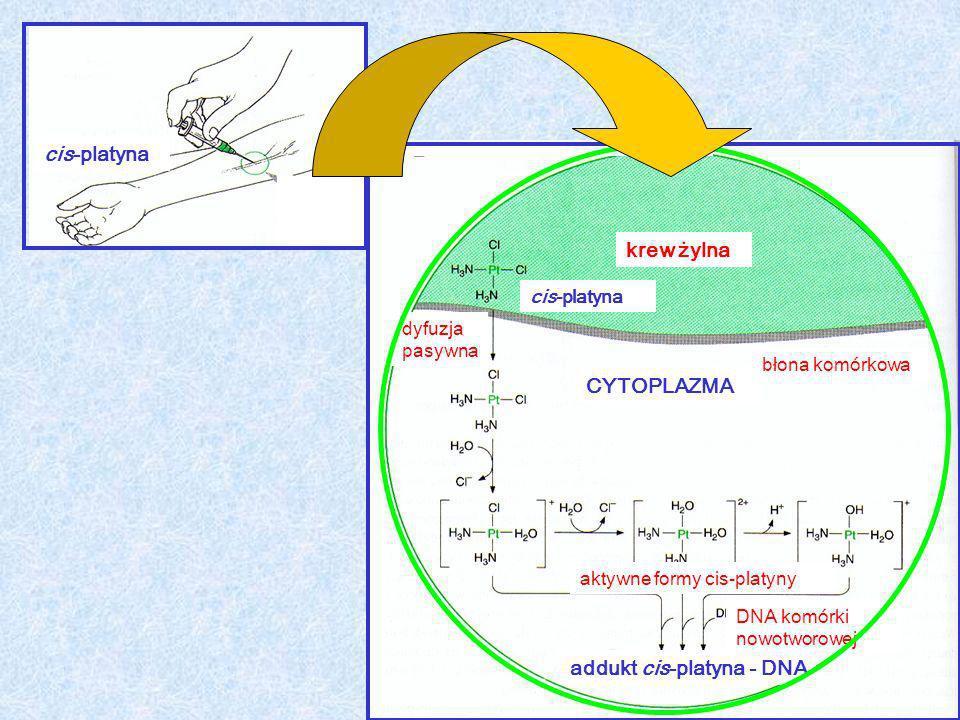 cis-platyna dyfuzja pasywna addukt cis-platyna - DNA krew żylna cis-platyna CYTOPLAZMA błona komórkowa aktywne formy cis-platyny DNA komórki nowotworo