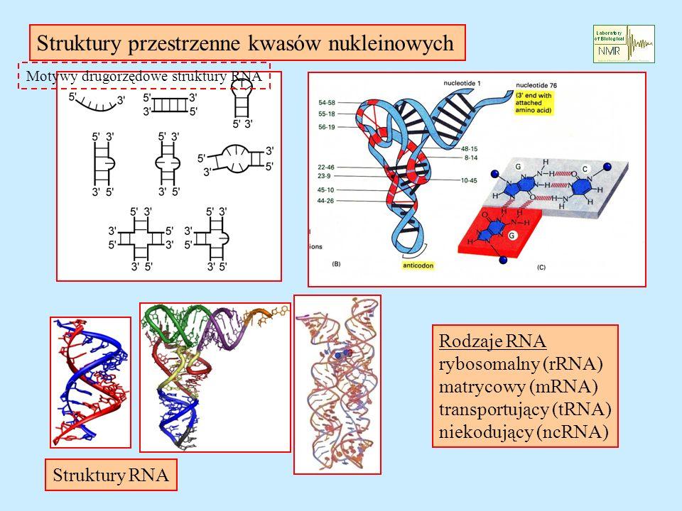Motywy drugorzędowe struktury RNA Rodzaje RNA rybosomalny (rRNA) matrycowy (mRNA) transportujący (tRNA) niekodujący (ncRNA) Struktury przestrzenne kwasów nukleinowych Struktury RNA