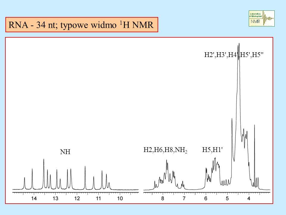 RNA - 34 nt; typowe widmo 1 H NMR NH H2,H6,H8,NH 2 H5,H1 H2 ,H3 ,H4 ,H5 ,H5