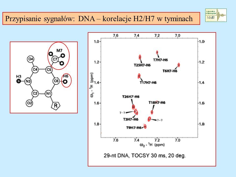 Przypisanie sygnałów: DNA – korelacje H2/H7 w tyminach