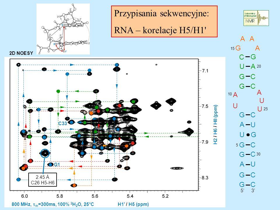 Przypisania sekwencyjne: RNA – korelacje H5/H1 G G A U U A C U 5 U G A C A AA G U C U C C C C A G U A G G G G 2D NOESY 800 MHz, m =300ms, 100% 2 H 2 O, 25°C H1 / H5 (ppm) H2 / H6 / H8 (ppm) C 3 5 10 15 20 2525 30 G G1 C33 2.45 Å C26 H5-H6