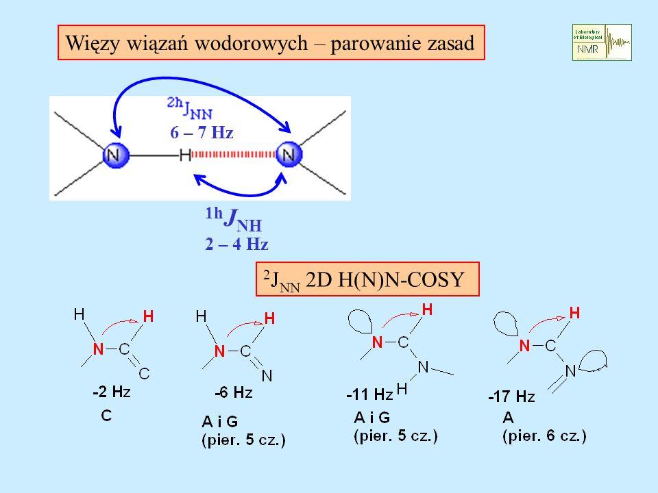 1h J NH 2 – 4 Hz 6 – 7 Hz 2 J NN 2D H(N)N-COSY Więzy wiązań wodorowych – parowanie zasad