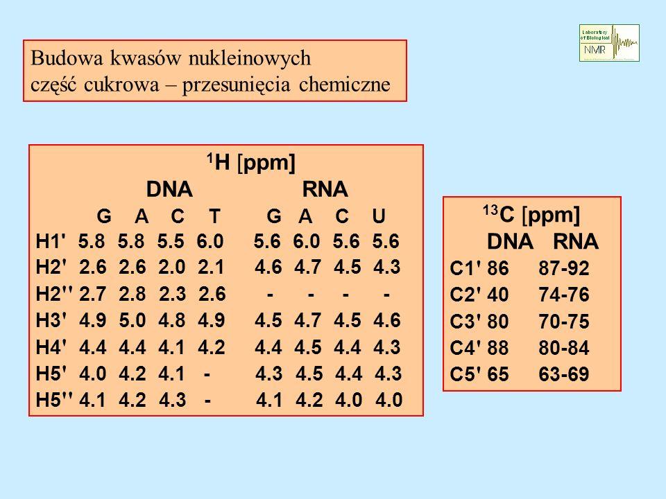 Budowa kwasów nukleinowych część cukrowa – przesunięcia chemiczne 1 H [ppm] DNA RNA G A C T G A C U H1 5.8 5.8 5.5 6.0 5.6 6.0 5.6 5.6 H2 2.6 2.6 2.0 2.1 4.6 4.7 4.5 4.3 H2 2.7 2.8 2.3 2.6 - - - - H3 4.9 5.0 4.8 4.9 4.5 4.7 4.5 4.6 H4 4.4 4.4 4.1 4.2 4.4 4.5 4.4 4.3 H5 4.0 4.2 4.1 - 4.3 4.5 4.4 4.3 H5 4.1 4.2 4.3 - 4.1 4.2 4.0 4.0 13 C [ppm] DNA RNA C1 86 87-92 C2 40 74-76 C3 80 70-75 C4 88 80-84 C5 65 63-69